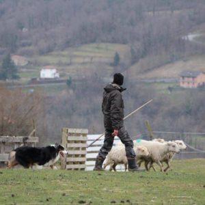 jack pecore